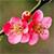 米德植物图谱